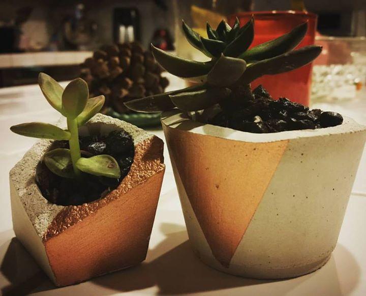 Succulents in Concrete and Copper