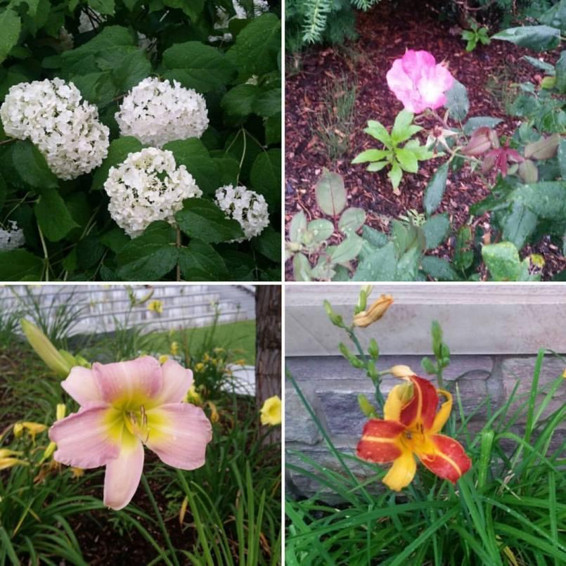 Vermont flowers